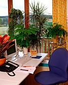 Büro mit Chlorophytum / Grünlilie, Schefflera / Strahlenaralie