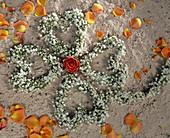 Kleeblatt aus Gypsophila / Schleierkrautherzen, Rosa