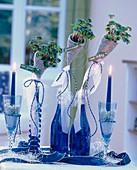 Tischdeko für Silvester, Oxalis deppei / Glücksklee