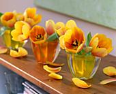 Tulipa 'Ad Rem' / Tulpen in kleinen Gläsern