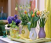 Tulipa 'Ad Rem' / Tulpen, Narcissus 'Bridal Crown'/ Narzissen,