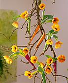 Sambucus / Holunderzweige, Tulipa 'Ad Rem' / Tulpen an der