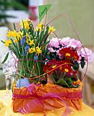 Narcissus 'Tete a Tete' / Narzisse, Azalea / Zimmerazalee, Primula