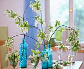 Prunus padus / Traubenkirsche in Gläsern und blauen