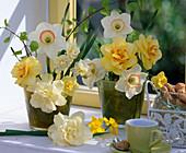 Narcissus 'Bridal Crown', 'High Society', 'Texas', 'Obdam', 'Tete a