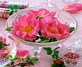 Rosa rugosa / Kartoffelrose (Apfelrose), Blüten schwimmen in