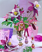 Aquilegia 'Swan Burgundy / White', 'Spring Magic hellrot -weiß'