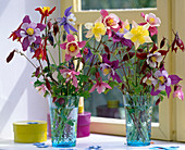 Aquilegia 'Swan-Mix', 'Spring Magic' / Akleien in blauen Gläsern
