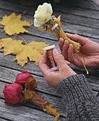 Flasche im Blätterkleid: 3/6. Rosa / Rosen im Wasserröhrchen, mit Acer / Ahornla