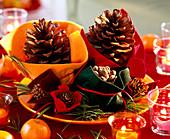 Pinus / Pinienzapfen, Kiefernzapfen und Seidenkiefer im Filz auf orangem