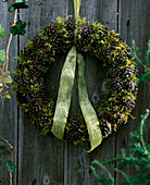 Pinus / Kranz aus Kiefernzapfen und Moos