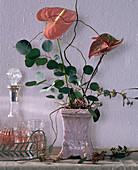 Anthurium andreanum / Flamingoblumen