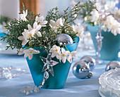 Cupressus arizonica (Arizonazypresse), Narcissus (Tazett-Narzissen), Glassterne,