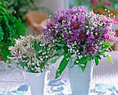 Centaurea montana / Flockenblume