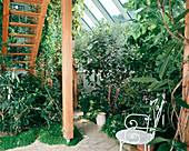 Wintergarten mit Passiflora, ACCA Sellowiana,