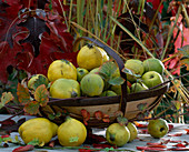 Korb mit Chaenomeles, Birnenquitten und Apfelquitten