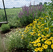 Kräutergarten mit Arnika (Arnica montana), Kamille (Matricaria chamomilla) und Salbei (Salvia officinalis)