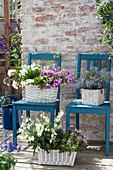 weiße Körbe mit Balkonblumen auf blauen Stühlen