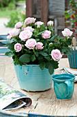Rosa (Rose) im türkisen Übertopf als Tischdeko