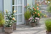 Terrasse mit Rosen und Gräsern