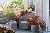 Herbstliche Terrasse mit Begonia (Begonien), Coleus (Buntnessel)