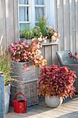 Spaetsommerterrasse mit Begonia Summerwings 'Apricot',