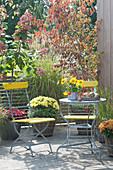 Herbstterrasse mit Gräsern und Chrysanthemen