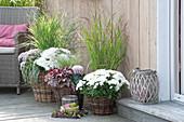 Terrasse mit weissen Chrysanthemen und Gräsern