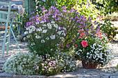 Terrassenbeet mit Sommerblumen lila und weiss