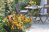 Kleine Sitzgruppe am Terrassenbeet : Rudbeckia hirta (Sonnenhut)
