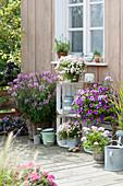 Spaetsommerterrasse mit Sommerblumen