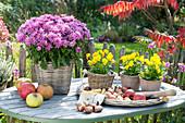 Herbstliches Stillleben auf Gartentisch : Chrysanthemum indicum