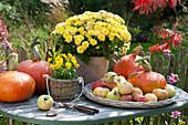 Herbstarrangement auf Tisch am Gartenzaun : Chrysanthemum indicum