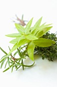 Herb bouquet with rosemary, thyme and lemon verbena