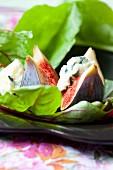 Feigensalat auf Rote-Bete-Blättern mit Roquefort