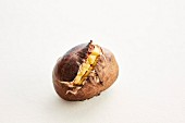 A roasted chestnut on a white background