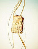 Organic Honey with Honeycomb
