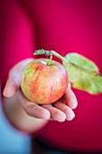 Frau hält Apfel mit Stiel und Blatt