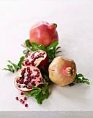 In Season - Pomegranate