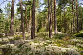 A forest in southern Sweden