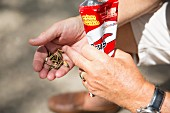 A man shelling 'pipas' (sunflower seeds) in the Retiro Park, Madrid, Spain