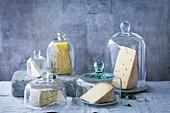 Several varieties of cheese under cheese bells