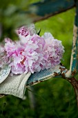 Rosafarbene Pfingstrosen auf einem alten Metallstuhl im Garten