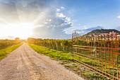 Weinanbau bei Cavaion Veronese, Veneto, Italien