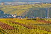 Weinberge im Herbst (Escherndorf, alte Mainschleife, Franken, Bayern, Deutschland)