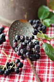Aronia berries in a strainer