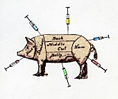 Pig marked as joints of meat with syringes sticking in