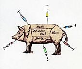 Markiertes Schwein mit Spritzen