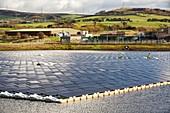 Floating solar panels, Godley Reservoir, UK