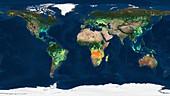 Global burned areas, satellite map